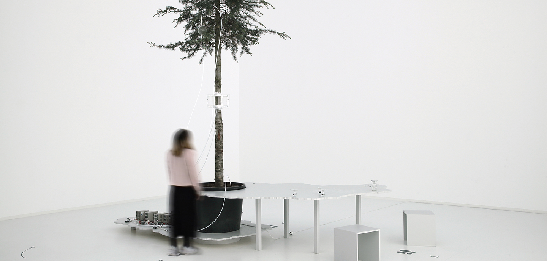 One Tree ID